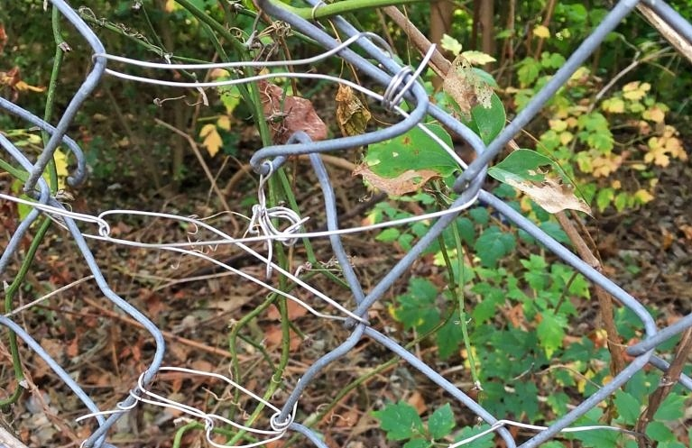 paper clips used to improperly fix a perimeter security fence